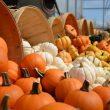 Pumpkin Pxhere.com 110x110
